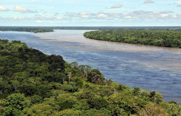 Lasy deszczowe w Amazonii niedaleko Manaus