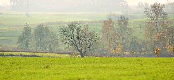 Zielone pole z drzewami w Polsce