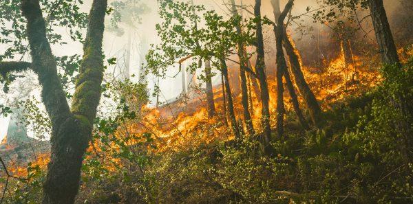Pożar lasu w Portland w 2018 roku